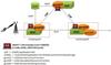 MAPS™ CAP Protocol Emulator -- XX696 -Image