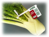 Anise Twist-Ems Label-Ties - Image