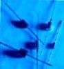 Bidirectional Transient Voltage Suppression Diode -- 48F5850