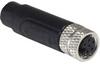 Circular Cable Assemblies -- 708-PXPTPU08FBF06ACL020PUR-ND -Image