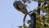 BA10 LLC Parking Lot and Street LED Lighting -- Cobra Head Retrofit