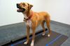 Animal Step Pressure Measurement System -- Walkway™ -Image