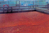 Membrane Pretreatment -- Leopold® Clari-DAF® MP System