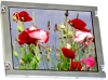 Display Modules - LCD, OLED, Graphic -- 73-13897-ND