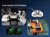 Live Animal Stabilization Sensor -- LASS -- View Larger Image