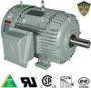 IEEE-841 Motors-Rigid Base, IEEE-841 Rigid Base -- IEEE150-18-445TBB -Image