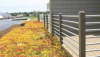Live Roofing Systems -- Green Roofing - Image