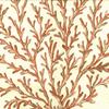 Fan Coral Fabric -- R-Neptune