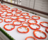 KleanTop Plastic Modular Conveyor Belt -- 1010 Series