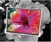 Opto Electronics, LCD Dev Kit;6.4 In.;TFT;320X234;1/4 VGA Video -- 70157048 - Image