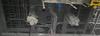 BOP Lift Cylinders