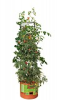 Tomato Barrel w/ 4' Tower -- GCTB