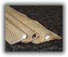 Tadpole Tape -- Tetraglas® 3000, 3000 Rope Core - Image