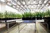 Conviron Growth House - Image