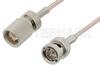 75 Ohm 1.6/5.6 Plug to 75 Ohm BNC Male Cable 12 Inch Length Using 75 Ohm RG179 Coax -- PE36129-12 -Image