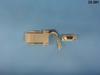 Adapter, DB9F-RJ45 Jack, (Beige) -- 32-281