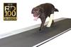 Animal Gait Analysis System -- Strideway™ -Image